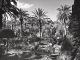 Garden of Palm Trees in Palermo Photographic Print by A. Villani