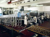 The Inside of the Alemagna Factory, Candied Fruit Production Photographic Print by A. Villani
