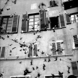 Pigeons in Flight in Front of a House Photographic Print by Vincenzo Balocchi