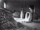 Inside a Factory, a Few Workers Arrange the Raw Hemp Fibers in Bunches Photographic Print by A. Villani