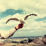 Seagull Perched on the Hand of a Man Photographic Print by A. Villani
