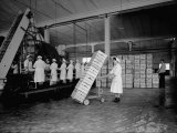 Working of the Fruit in a Warehouse of the Colombani Factory at Portomaggiore, Ferrara Photographic Print by A. Villani