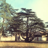 Park with an Ancient Fir Photographic Print by A. Villani