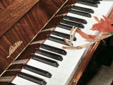 Piano, Keyboard Photographic Print by A. Villani