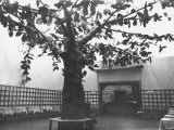 View of a Salon Prepared for a Party with a Fake Tree in the Center Photographic Print by Carlo Wulz