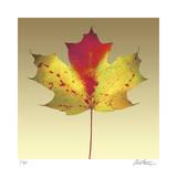 Maple Leaf Giclée-tryk af Robert Mertens