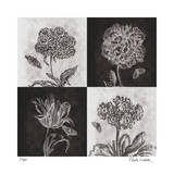 Etched Florals Limited Edition by Paula Scaletta