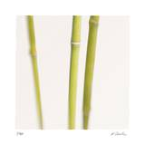 Bamboo Study 9 Limited Edition by Claude Peschel Dutombe