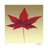 Japanese Maple Giclée-tryk af Robert Mertens