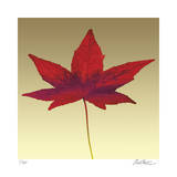 Japanese Maple Giclee Print by Robert Mertens