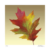 Oak Leaf Giclee Print by Robert Mertens