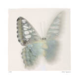 Butterfly Study 6 Edition limit&#233;e par Claude Peschel Dutombe