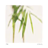 Bamboo Study 5 Giclee Print by Claude Peschel Dutombe