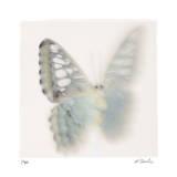 Butterfly Study 8 Edition limitée par Claude Peschel Dutombe