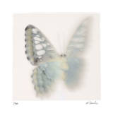 Butterfly Study 8 Giclee Print by Claude Peschel Dutombe