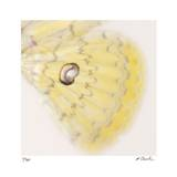 Butterfly Study 12 Limited Edition by Claude Peschel Dutombe