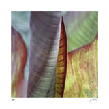 Banana Leaves IV Limited Edition by Joy Doherty