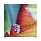 Banana Leaves III Limited Edition by Joy Doherty