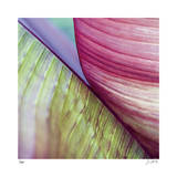 Banana Leaves II Limited Edition by Joy Doherty