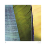 Banana Leaves I Giclee Print by Joy Doherty