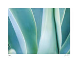 Agave III Limited Edition by Joy Doherty