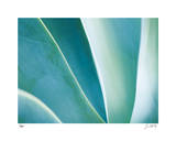 Agave II Giclee Print by Joy Doherty