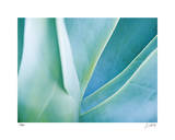 Agave I Limited Edition by Joy Doherty