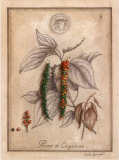 Poivre de Cayenne Prints by Vincent Jeannerot