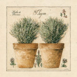 Herbes de Provence, Thym Print by Laurence David