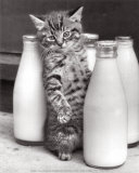 Cat with Bottles of Milk Prints by Paul Kaye