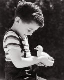 Boy Holding a Duckling Posters af H. Armstrong Roberts
