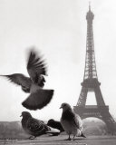 Eiffel Tower with Pigeons, Paris Posters af Elise Hardy