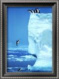 Penguins Diving Off an Iceberg Prints by Steve Bloom