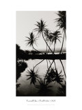 Coconut Palms, Pearl Harbor, Hawaii, 1927 Giclee Print