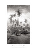 Coconut Grove, Lahaina, 1910 Giclee Print by Ray Jerome Baker