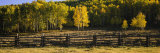 Wooden Fence and Aspen Trees in a Field, Telluride, San Miguel County, Colorado, USA Photographic Print by  Panoramic Images