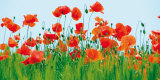 Champs de coquelicots Affiches par Jan Lens