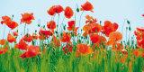 Poppy Fields Posters by Jan Lens