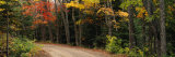 Road Passing Through a Forest, Keweenaw County, Keweenaw Peninsula, Michigan, USA Photographic Print by  Panoramic Images