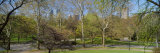 Trees in a Park, Central Park West, Central Park, Manhattan, New York City, New York State, USA Photographic Print by  Panoramic Images