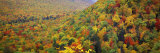 Mountain Forest in Autumn, Nova Scotia, Canada Photographic Print by  Panoramic Images