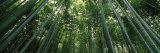 View of Bamboo Trees, Arashiyama, Kyoto Prefecture, Kinki Region, Honshu, Japan Photographic Print by  Panoramic Images