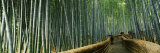 Arashiyama, Kyoto Prefecture, Kinki Region, Honshu, Japan Photographic Print by  Panoramic Images