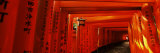 Torii Gates of a Shrine, Fushimi Inari-Taisha, Fushimi Ward, Kyoto, Honshu, Japan Fotografisk trykk av Panoramic Images,