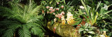 Close-up of Orchids, San Francisco, California, USA Photographic Print by  Panoramic Images