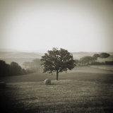 Single Tree in the Middle of Field, San Quirico D'Orcia, Tuscany, Italy Photographic Print by Lee Frost