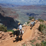Tourists on Horseback Returning from Trekking in the Grand Canyon, Arizona, USA Photographic Print by Tony Gervis