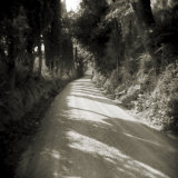 Country Lane Lined by Trees with Sunlight Filtering Through, Lucignano D'Asso, Tuscany, Italy Photographic Print by Lee Frost