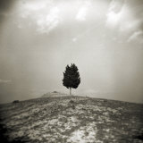 Image Taken with a Holga Camera of Single Tree on Hilltop, Lucignano D'Asso, Tuscany, Italy Photographic Print by Lee Frost