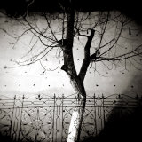 Floodlit Tree at Night, Against Mud Wall, Chefchaouen, Morocco Photographic Print by Lee Frost